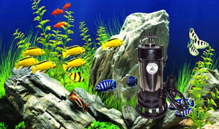 máy bơm nước hồ cá Koi